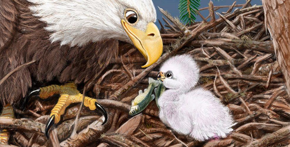 la leyenda del águila