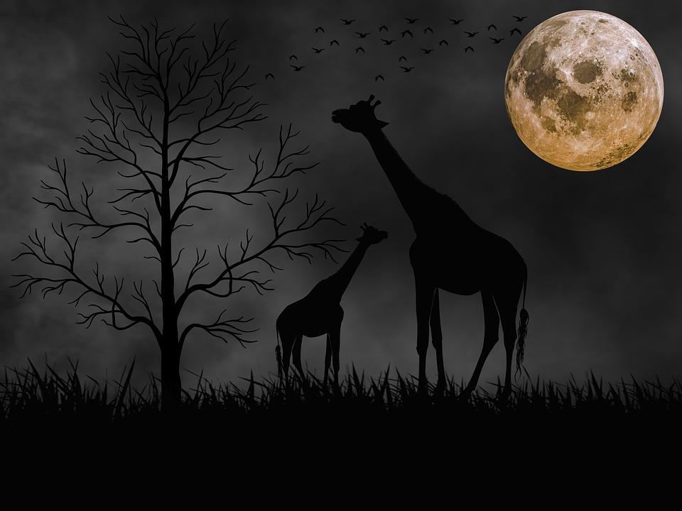 animales luna llena