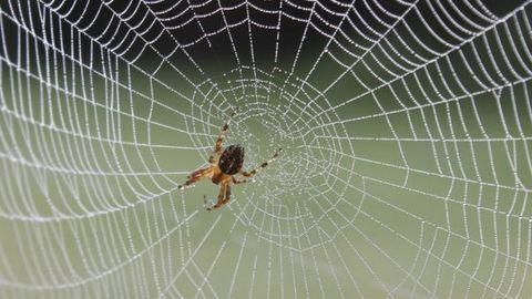 la niña araña legends