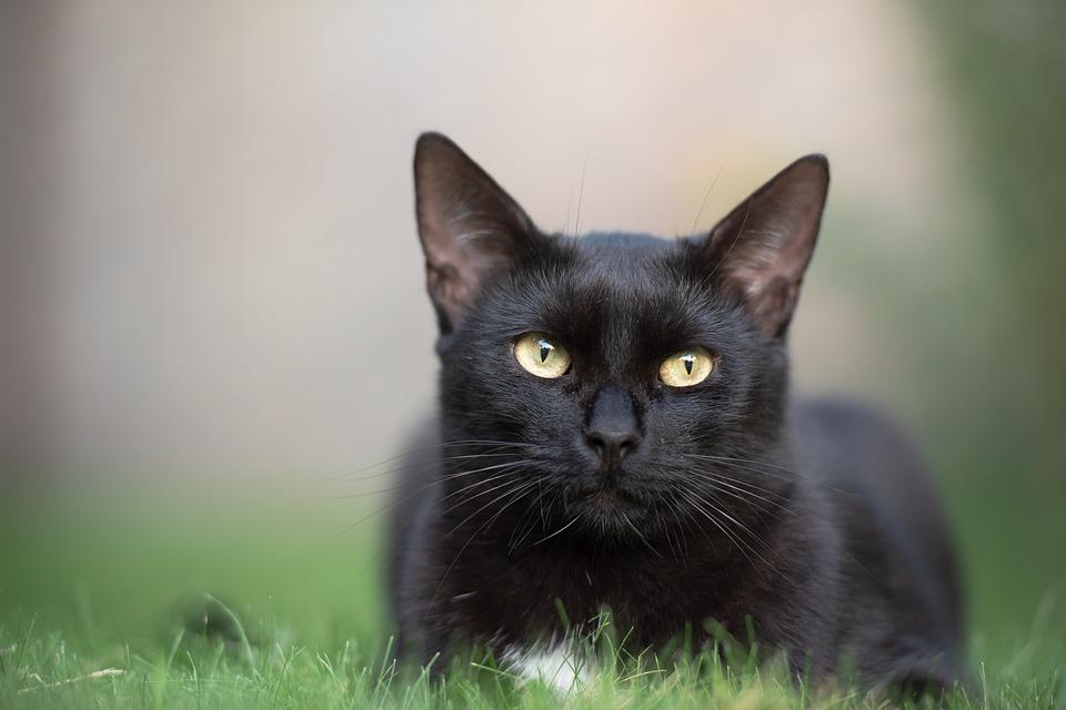 leyenda del gato negro