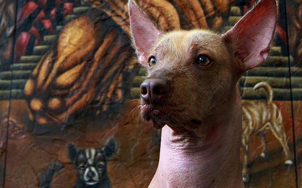 el perro y kakasbal leyenda maya