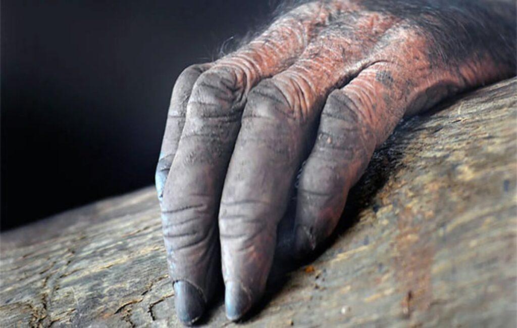 la mano peluda leyendas