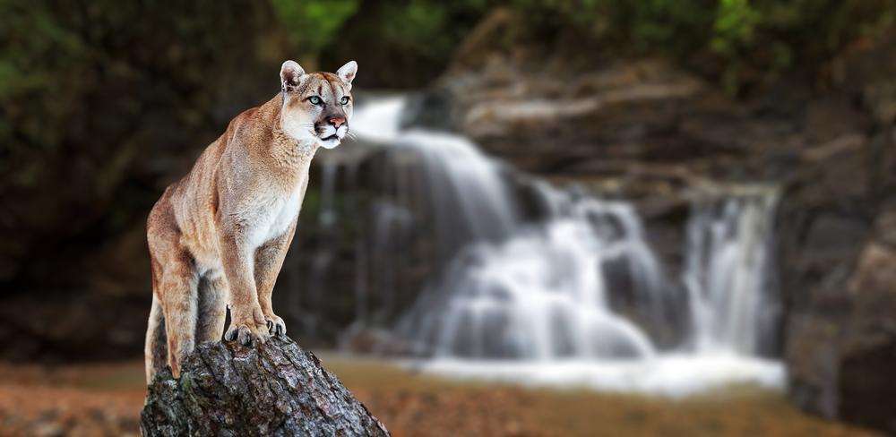 leyenda de la piedra del leon