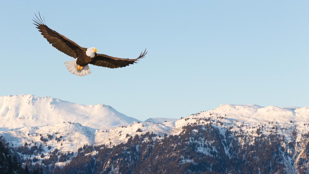 leyenda del águila niños