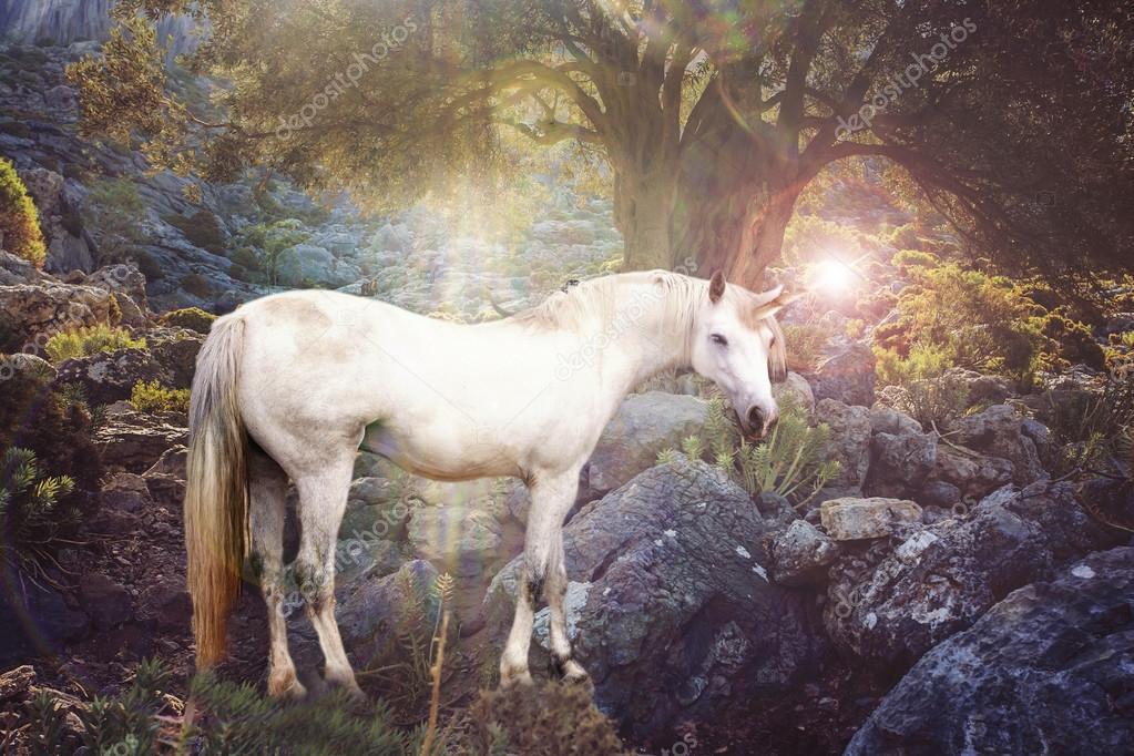 leyenda del poder de los unicornios