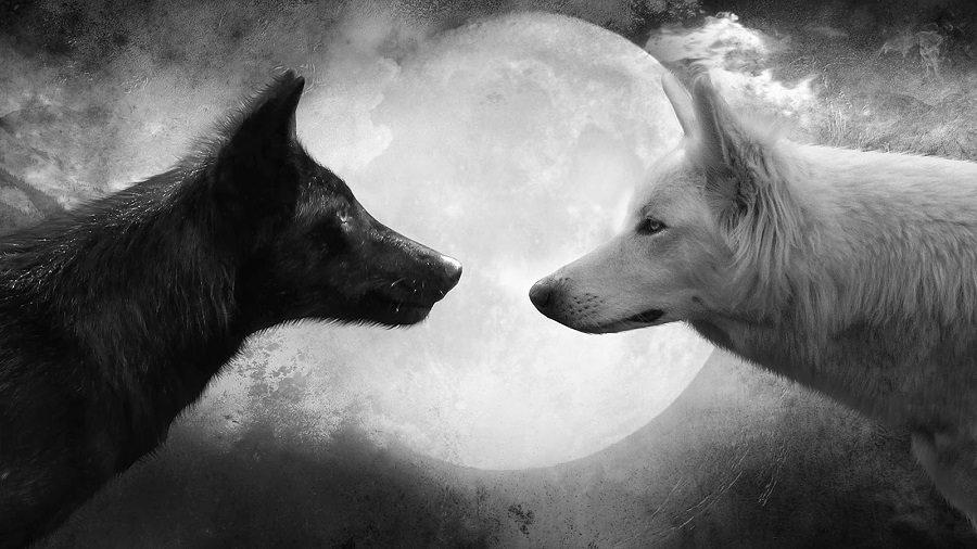 leyendas de lobos
