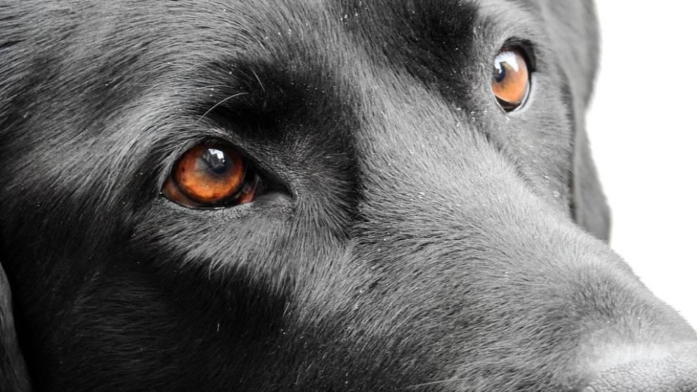 leyenda de los ojos de los perros