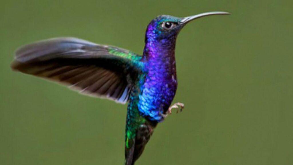 leyenda del colibri